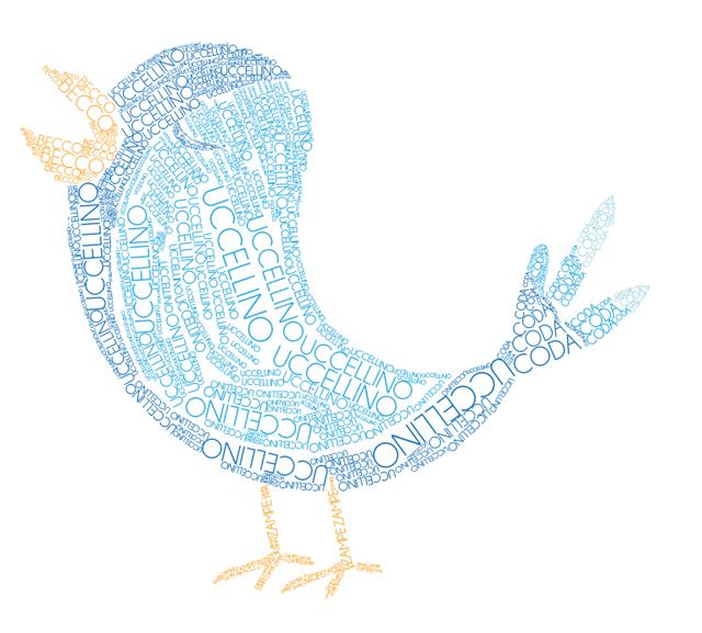 Uccellino colorato