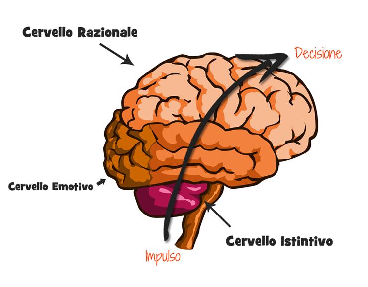 Cervello tripartito e processo decisionale